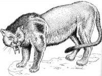 Critter Saber-tooth Cat.jpg